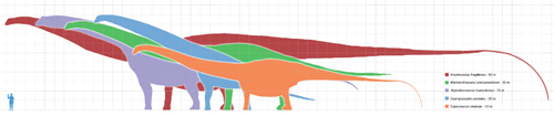 Different sizes of Saurapods. Wikipediea:Matt Martyniuk