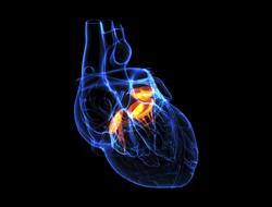 Healing the broken hearted.