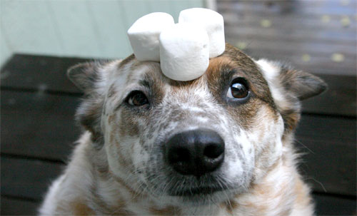 What eating marshmallows tell us about life? Photo Foter/Flicker/image415