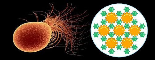 The MO-1 bacteria with its advanced gear box. The yellow color designates the main flagella. Image God Alive
