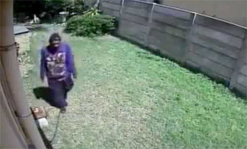 Yorkie takes on an intruder. YouTube capture