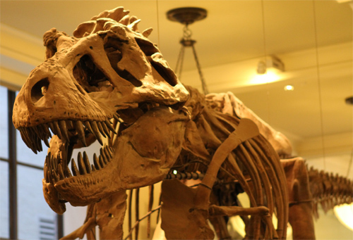 A T-Rex who bleeds? Photo: Zetgem/Foter/CC BY-NC