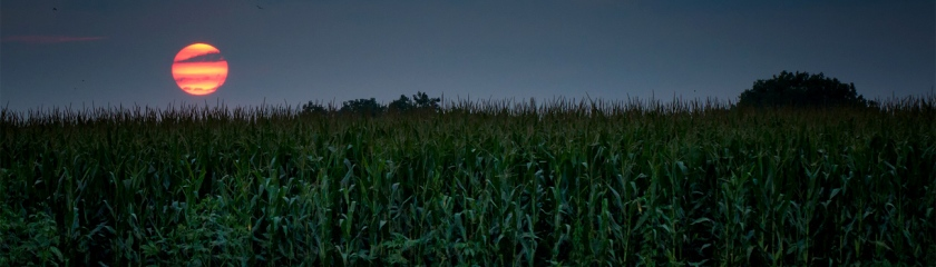 Cornfield Photo: Don Burkett/Foter/CC BY-NC-ND
