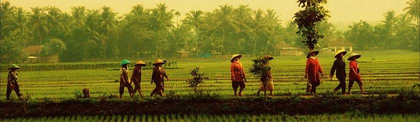 Sidokarto, Indonesia Photo: Jose Javier Martin Espartosa/Flickr