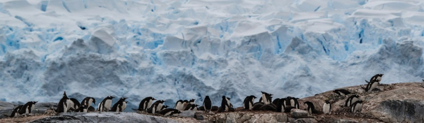 Antarctic penguin colony Photo: Ray Muzyka/Flickr