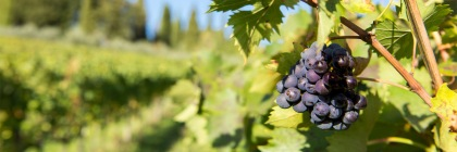 Working in God's vineyard. Credit: Shawn Harquail/Flickr/Creative Commons