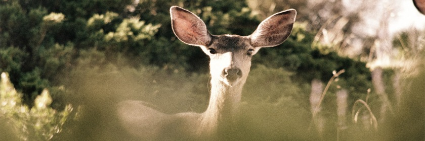 What voices are you hearing? Credit: Robert Gourley/Flickr/Creative Commons