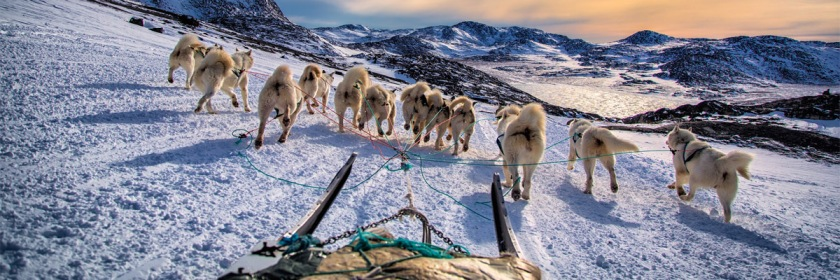Dog sledding on Greenland, where the ice and snow is returning. Credit: Baron Reznik/Flickr/Creative Commons