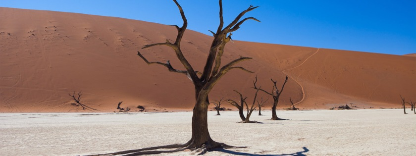 Nambia desert Credit: John Adams/Flickr/Creative Commons