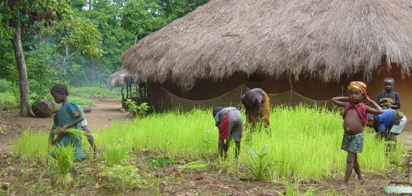 Rural village in Sierra Leone Credit: martagiqs/Flickr/Creative Commons