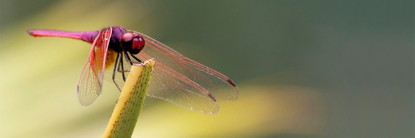 The complexity of a simple little multi-winged dragonfly that can reach speeds of 60 miles an hour (97 km) Credit: Wayne Hodgkinson/Flickr/Creative Commons