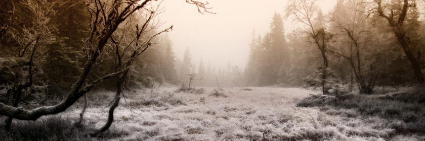 Forest near Oslo, Norway Credit: Thorbjorn Sigberg/Flickr/Creative Commons