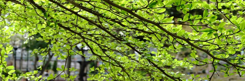 Trees spring to life. Credit: hoho_simon/Flickr/Creative Commons