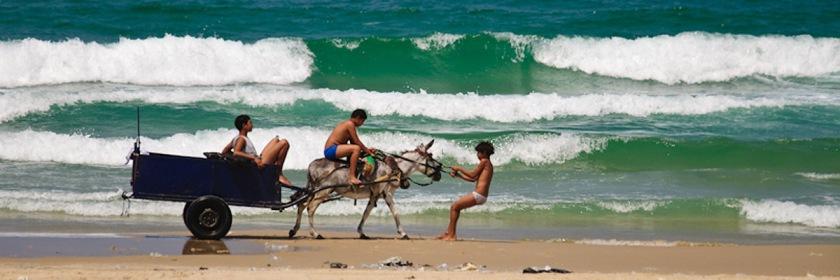 Stubborn donkey on a Mediterranean beach Credit: vad_levin/Flickr/Creative Commons