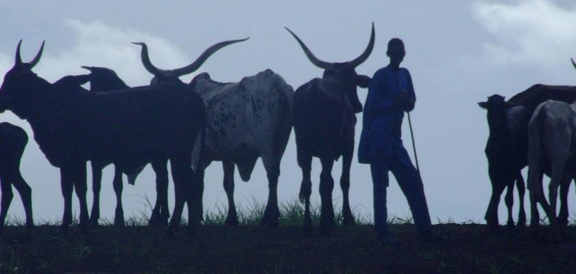Fulani herdsmen Credit: John Mauremootoo/Flickr/Creative Commons