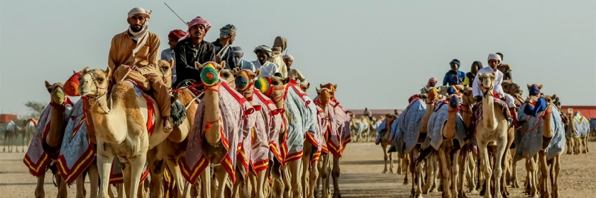 Camel caravan in Saudi Arabia Credit: Linda Polik/Flickr/Creative Commons