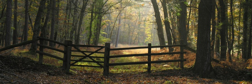Fence in New Forest, Hampshire, England Credit: jodi/Flickr/Creative Commons