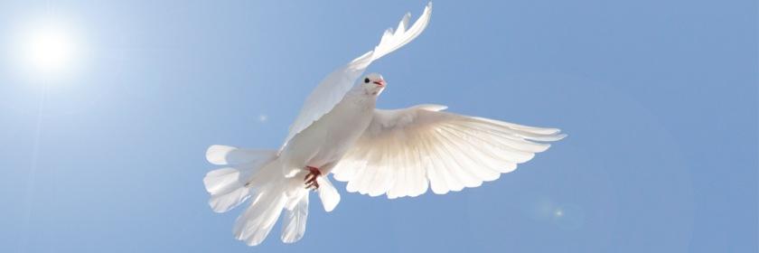 Dove-Holy-Spirit-ic-11-17-2019